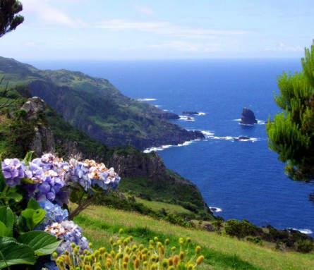 Kiwis von den Azoren - nicht abwegig - die Inseln sind allesamt sehr fruchtbar, hier zu sehen Hortensiengerahmte Ausblicke auf Flores