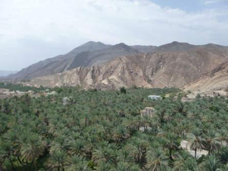 Grüne Palmengärten im Kontrast zu den kargen Felslandschaften im Hajar-Gebirge
