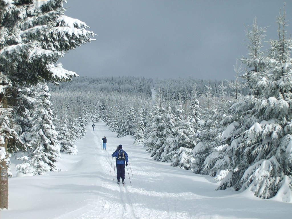 Auf Ski durch den Winterwald