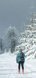 Im Winterwald ...