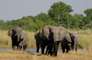 Eine Elefantenherde nähert sich