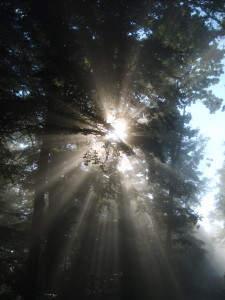 Die Sonne bahnt sich ihren Weg ...