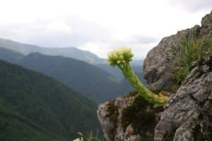 Wanderreise mit dem Naturexperten Vlado Trulik