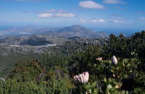 Blick vom Tafelberg in die Kapregion