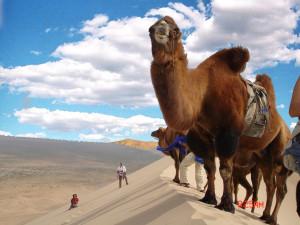 Auf Kameltour in der Wüste Gobi
