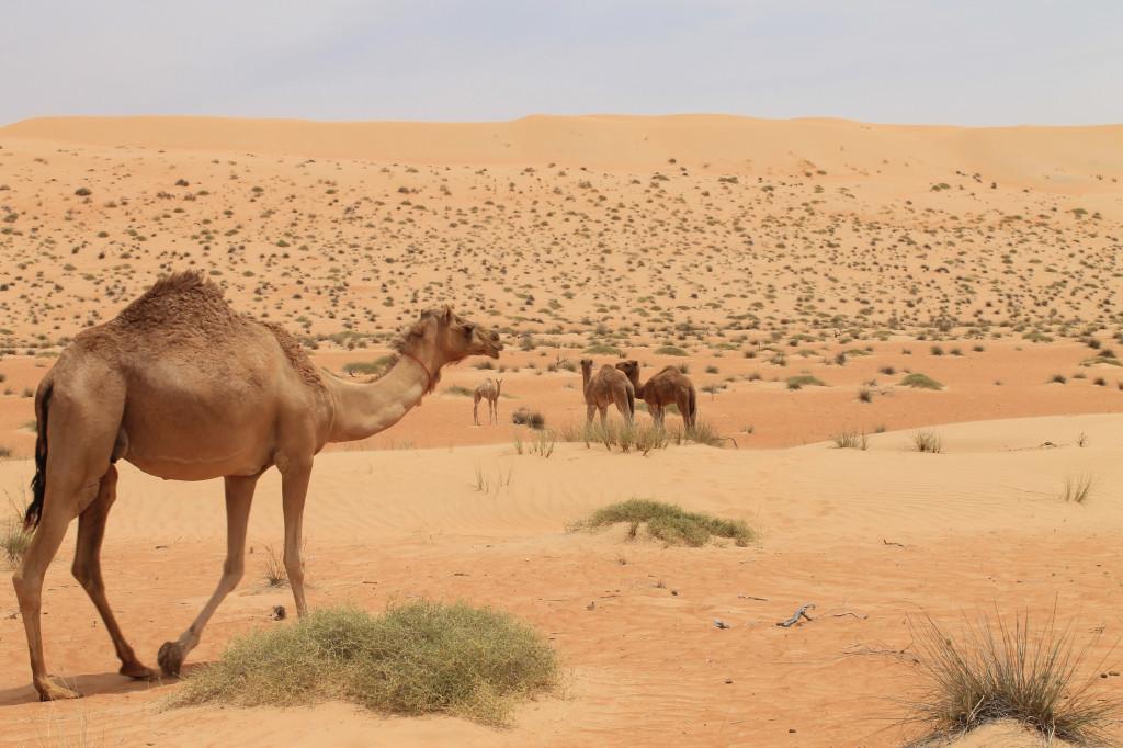 Die Wüste berauscht ...
