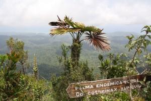 Endemische Pflanzenvielfalt im Osten Kubas