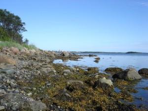 Märchenhaft schön: Natur des russischen Nordens. Im Sommer sind hier oft Beluga-Wale zu sehen