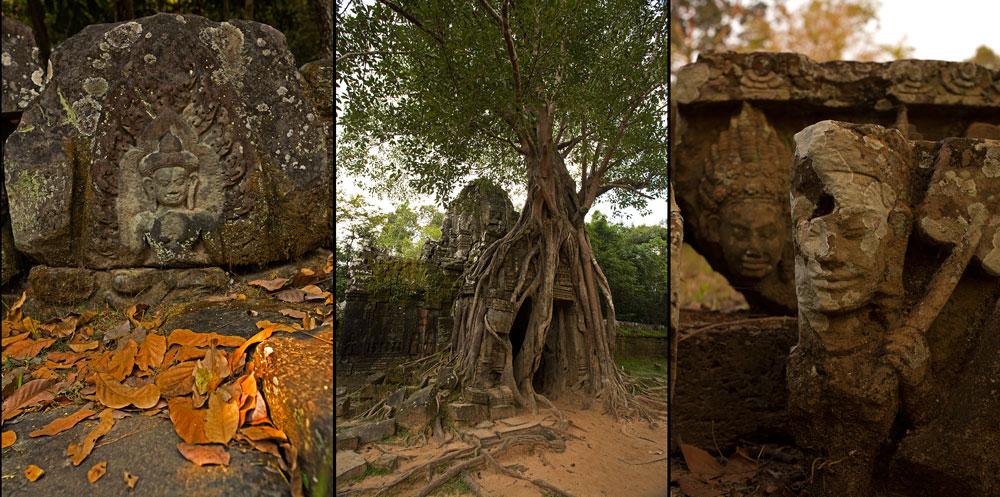 Kleine fotografische Leckerbissen im Tempel Ta Phrom
