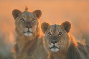Tierische Entdeckungen im Krüger-Nationalpark