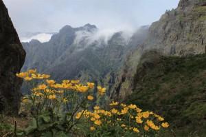 Berg- und Blumeninsel Madeira