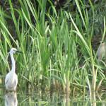 Imposante Vogelwelt
