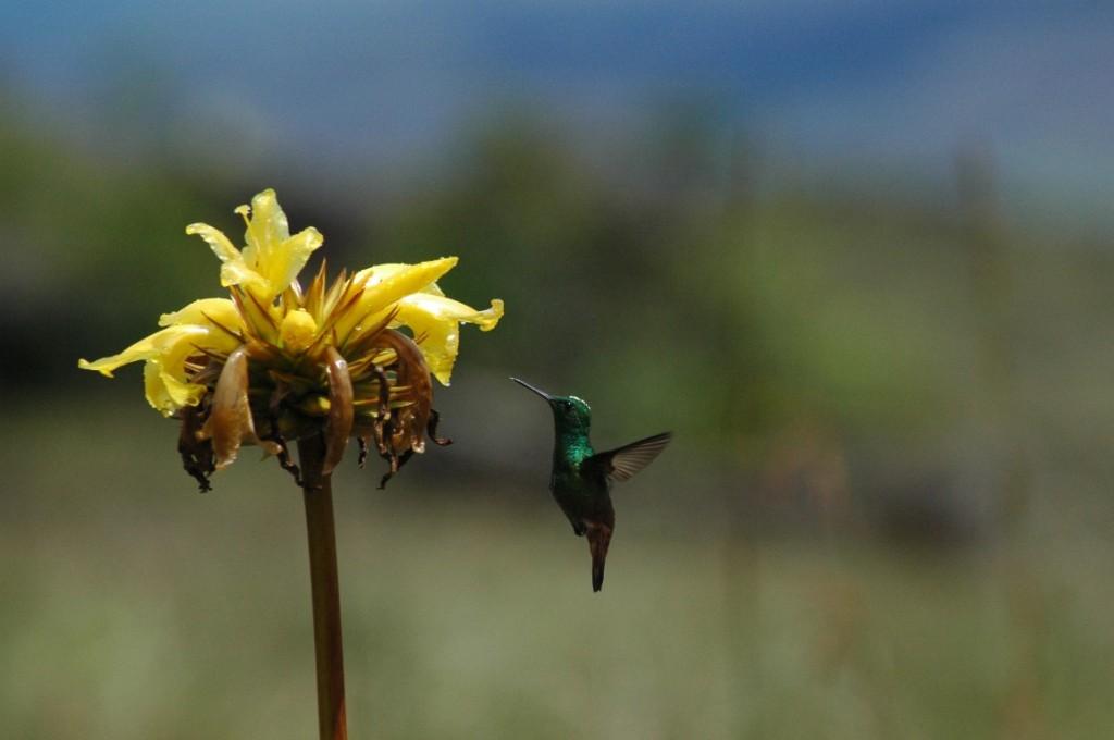 Brasilien Naturparadies