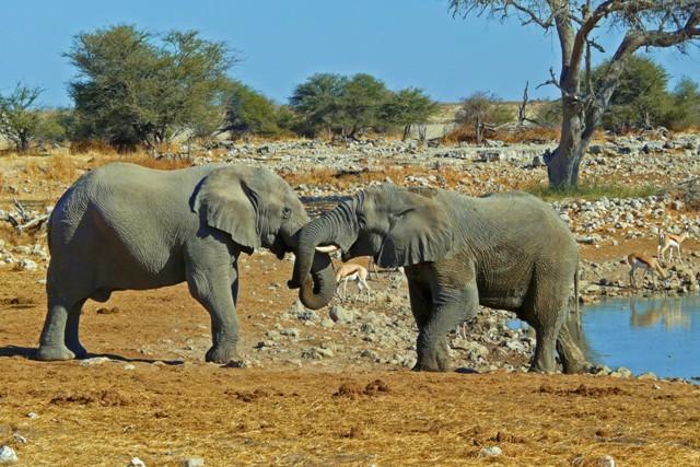 Im Etosha-Nationalpark