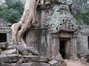 Vom Urwald fest im Griff: der Tempel Ta Prohm