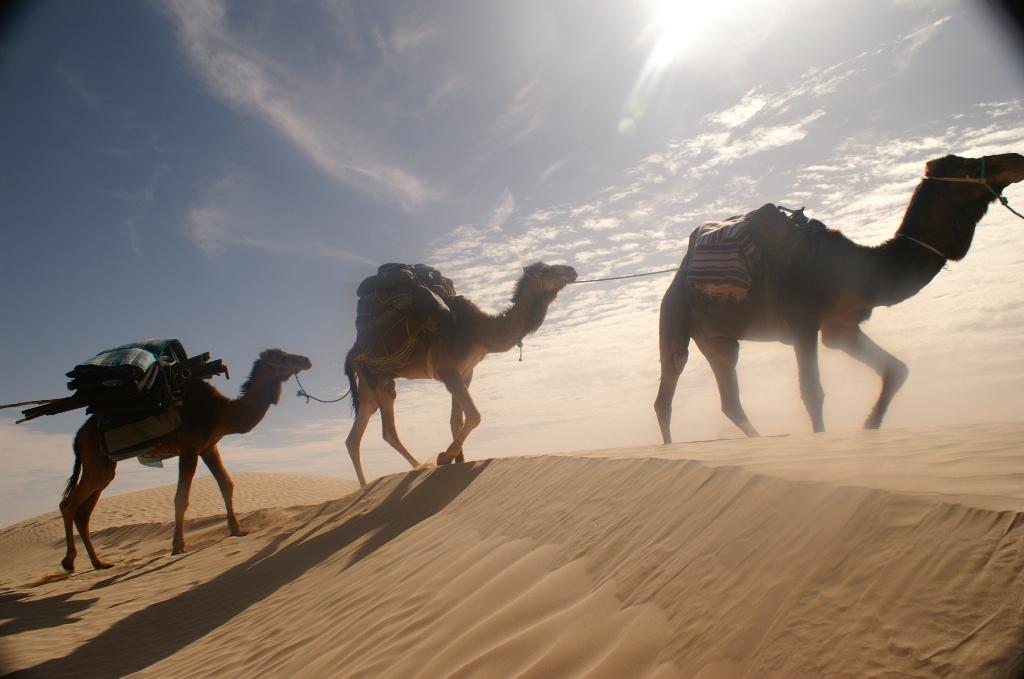 Mit Kamelen quer durch die Sanddünen