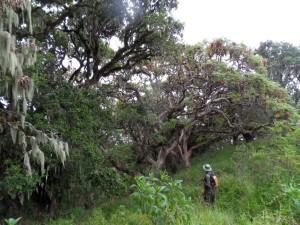Mit Ranger Yoana unterwegs an den urwüchsigen Hängen des Ngorongoro-Vulkans