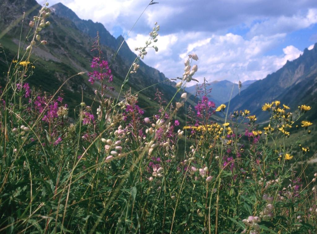 Kaukasische Blumenwiesen - wie im Märchen!