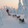 Unterwegs im Winterwunderland mit eigenem Huskygespann