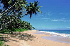 Im Süden Sri Lankas laden Traumstrände zum Baden und Schnorcheln ein.