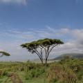 Rund um den Kilimanjaro ist Nordtansania von Savanne geprägt (© Maik Kämmerer)