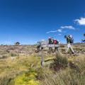 Tag 3 der Kilimanjaro-Besteigung. Ab 4000 Höhenmeter wird die Vegetation langsam karg.  (© Maik Kämmerer)