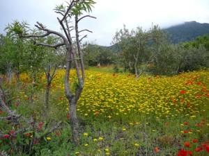 Blühende Wiesen auf den Liparischen Inseln