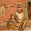 Begegnungen in Pashupatinath
