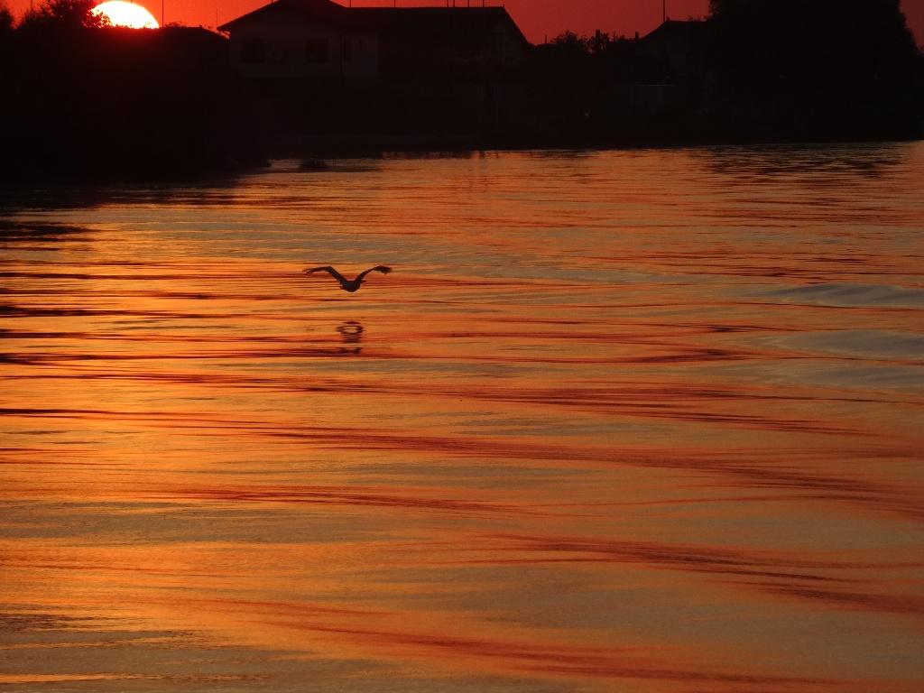 Ein Vogel in der Morgensonne