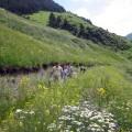 Der Kaukasus beeindruckt mit seiner Pflanzenvielfalt
