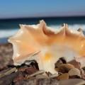 Muschelfund am Strand