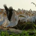 Das UNESCO-Schutzgebiet Djoudj im Norden des Senegal: ein Paradies für Vogelbeobachter