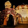 Fester Bestandteil: die opulent geschmückten Elefanten (© Dreamstime.com, lizensiert fuer a&e erlebnisreisen)