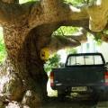 Kreta - Schattenparker
