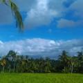 Radtour durch Reisfelder ...