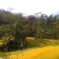 ... in der Nähe von Ubud