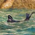 Nicht nur am Taupo Point werden Sie Seelöwen antreffen