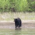 Eindeutig ein Schwarzbär