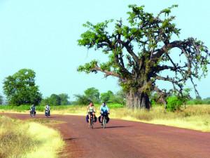 Radelnd durch das Sine-Saloum-Delta, vorbei an riesigen Baobabs