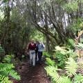 Wanderung auf der grünen Insel Chiloé