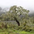 Am Mt. Meru fühlt man sich wie im Märchenwald.