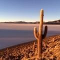 Auf der Insel Incahuasi im Salar de Uyuni, dem größten Salzsee der Erde