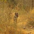 Der Ranthambore-Nationalpark gehörte einst zu den Jagdgründen der Maharajas