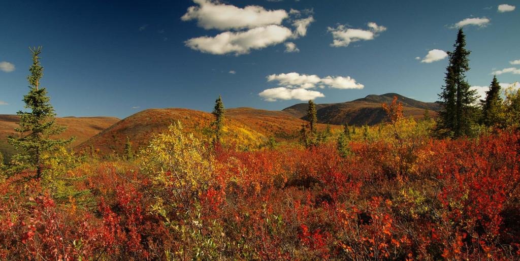 """Yukon zu einer der schönsten Zeiten des Jahres: im """"Indian Summer"""""""