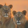 Auf Safari, u.a. im Krüger-Nationalpark