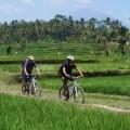 Per Rad durch die Reisfelder Balis