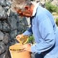 Zu Besuch in Stefanos Kräuter- und Bienengarten