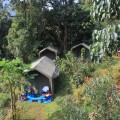 Im Dschungelcamp nimmt einen die Ruhe der Natur vollends ein