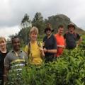 Wandern inmitten von Teeplantagen