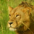 Auf Tierbeobachtung im Moremi-Wildreservat